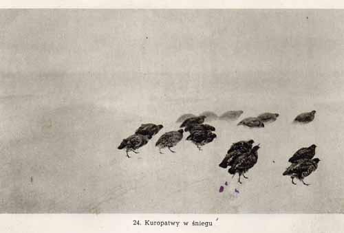 Chełmoński Józef, Kuropatwy w śniegu